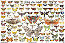 Moths of the World Educational Science Teacher Classroom Chart Poster 24x36