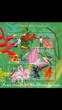 Puerto Rico Guinea Hummingbirds of Caribbean Shows Puertorican Emerald