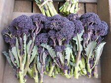 1500 Seeds of CABBAGE BROCCOLI Violet Early / Vegetable garden Vegetables Plants