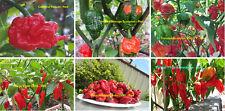 World's Official Top 6 Hottest Chilli Pack - Australian Grown - 60+ Seeds!