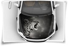 Leopard Wildnis Motorhaube Auto-Aufkleber Steinschlag-Schutz-Folie Airbrush Car