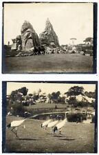 Lotto di due piccole foto originali di Roma Giardino zoologico Maggio 1911  S567