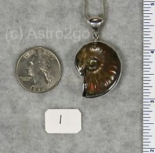 WHOLE AMMONITE PENDANTS $79 Sterling Silver Fossil Jewelry STARBORN CREATIONS