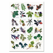 Tree Leaves A5 Identification Card Chart Postcard NEW