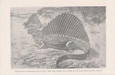 Kammsaurier dinosaurios dimetrodon incisivus litografía de 1901