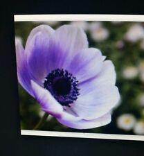 Poppy Lavender Flower Seeds