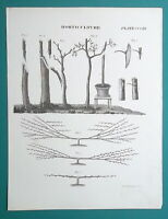 HORTICULTURE Gardening Grafting & Budding Trees Shrubs - 1817 Antique Print