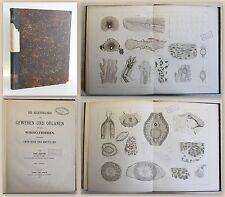 Fraisse Die Regeneration von Geweben & Organen bei Wirbeltieren 1885 Biologie xz