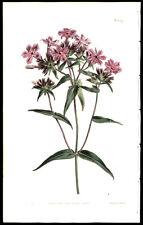 1827 S Edwards & W Curtis Engraving Superb Hand-Coloring Floral Leaf Lot (3)