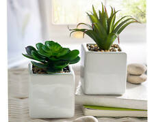 Set Of 2 Artificial Cacti In Ceramic Decorative Pots Plants Cactus Ornamental