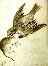 ILLUSTRATIONS STILL LIFE SPARROW AND RAT WILLIAM FOSTER C1890