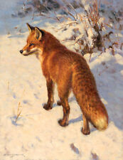 Fox Christmas cards pack of 10. Wildlife, Hunting, by Fred Haycock C434x