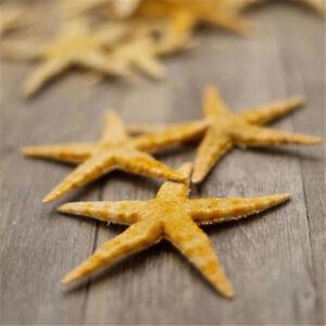 50 Tiny Mini Starfish Tan Flat (2-3cm) Beach Crafts Decor Nail Art