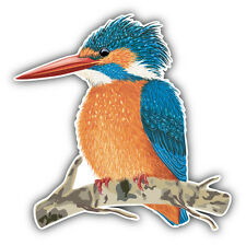 Kingfisher Bird Car Bumper Sticker Decal 5'' x 5''