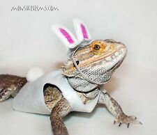 easter bunny outfit, lizard, bearded dragon, small animal clothing