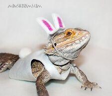 Vestito Da Coniglietto Pasquale, Lucertola, Barbuto Drago, piccoli animali Clothing
