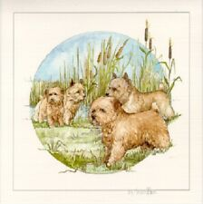 Norwich Norfolk Terrier Limited Edition Art Print by Barbara Hands Boz*