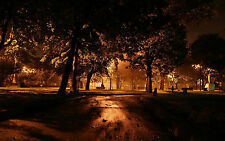 Framed Print - Brown Vintage Effect of a Wooded Park at Night (Picture Poster)