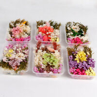 Dried Flowers Plant Herbarium Craft For Aromatherapy Candle Epoxy Resin Decor