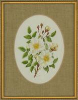 Dorothy Bovey - Fine Mid 20th Century Gouache, White Wild Roses
