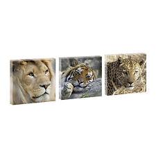Wildkatzen 2 -Hochwertiger  Kunstdruck auf Leinwand - dreiteilig -je 40 cm-40 cm