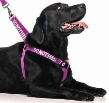 DO NOT FEED Purple Adjustable Walking Dog Harness Or Short Extra Long Lead Set