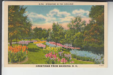 Springtime Greetings from Manning Sc N-799