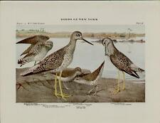1910 BIRDS OF NEW YORK PLATES 36 & 34 - ARTISTS: LOUIS AGASSIZ FUERTES  #N073