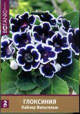 "Gloxinia /""Avanti F1 blue with white edge/""  Japanese High Quality"
