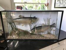 Two Taxidermy Cased Fish - Chub
