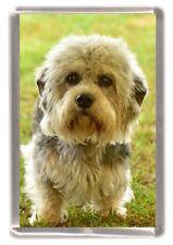 Dandie Dinmont Terrier Fridge Magnet Design Number 4 by Starprint