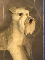 Hand Painted Sandicast Gray Schnauzer with Uncropped Ears Sculpture - Standing