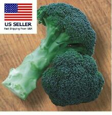Green Magic Broccoli.  Pack of 50 seeds.  Plant now for fall/winter! Non-gmo.