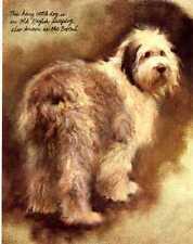 Old English Sheepdog - Vintage Dog Print - Poortvliet