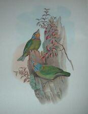 1969 FORMOSA BARBET John Gould Color Lithograph Print Asian Bird