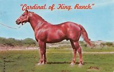 Kingsville Texas~Cardinal of King Ranch~Thoroughbred Horse~Hired Hand Son~1976