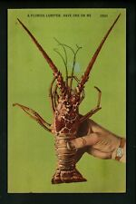 Fish Related postcard Florida lobster linen Colourpicture