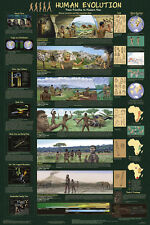 Human Evolution Educational Science Teacher Classroom Chart Print Poster 24x36
