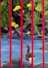 1960s Vintage Mexico City Duck Pond & Red Fence By Alfred Eisenstaedt Photo Art