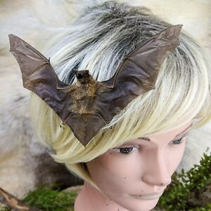 I20A Taxidermy Bat Hair Comb Barrett goth voodoo oddities curiosities oddities