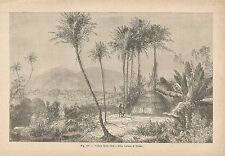 A2668 Timbo - Panorama - Xilografia - Stampa Antica del 1895 - Engraving
