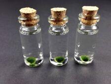Mini Marimo Moss Ball mini Bottle, Glass Jar, Terrarium in a Bottle, Mini Plant