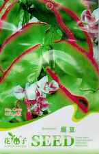1 Pack 6 Brow Bean Seeds Lablab Purpureus Black Lentil Garden Vegetable C079