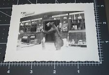 Taxidermy Bear Stuffed Real Trading Post Store Signs Vintage Snapshot PHOTO