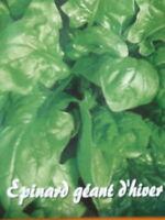 Légume EPINARD  géant d'hiver   semences Seeds  bio 200 graines France