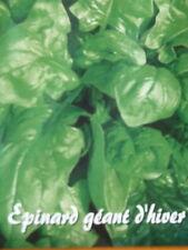 200//400 Graines Épinard Géant Hiver Résistant au Froid Légume Plante