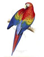 "Vintage John Gould Bird Art CANVAS PRINT~ Red Macaw 24""X18"""