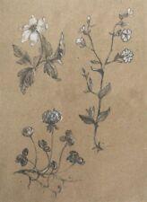 Botanical sketch of wildflowers. Pencil and pastel Original Handmade A4