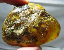 Large 42 gram piece of Baltic amber with insect - partially polished fossil