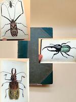 Käfer Bilder Gravuren Illustrationen von Insekten antikes Buch von 1843 Golitah